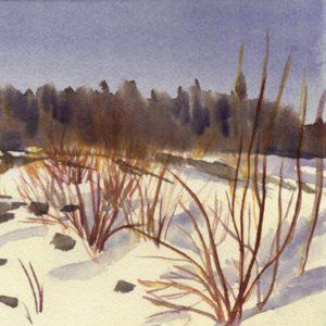 Winter Dogwood
